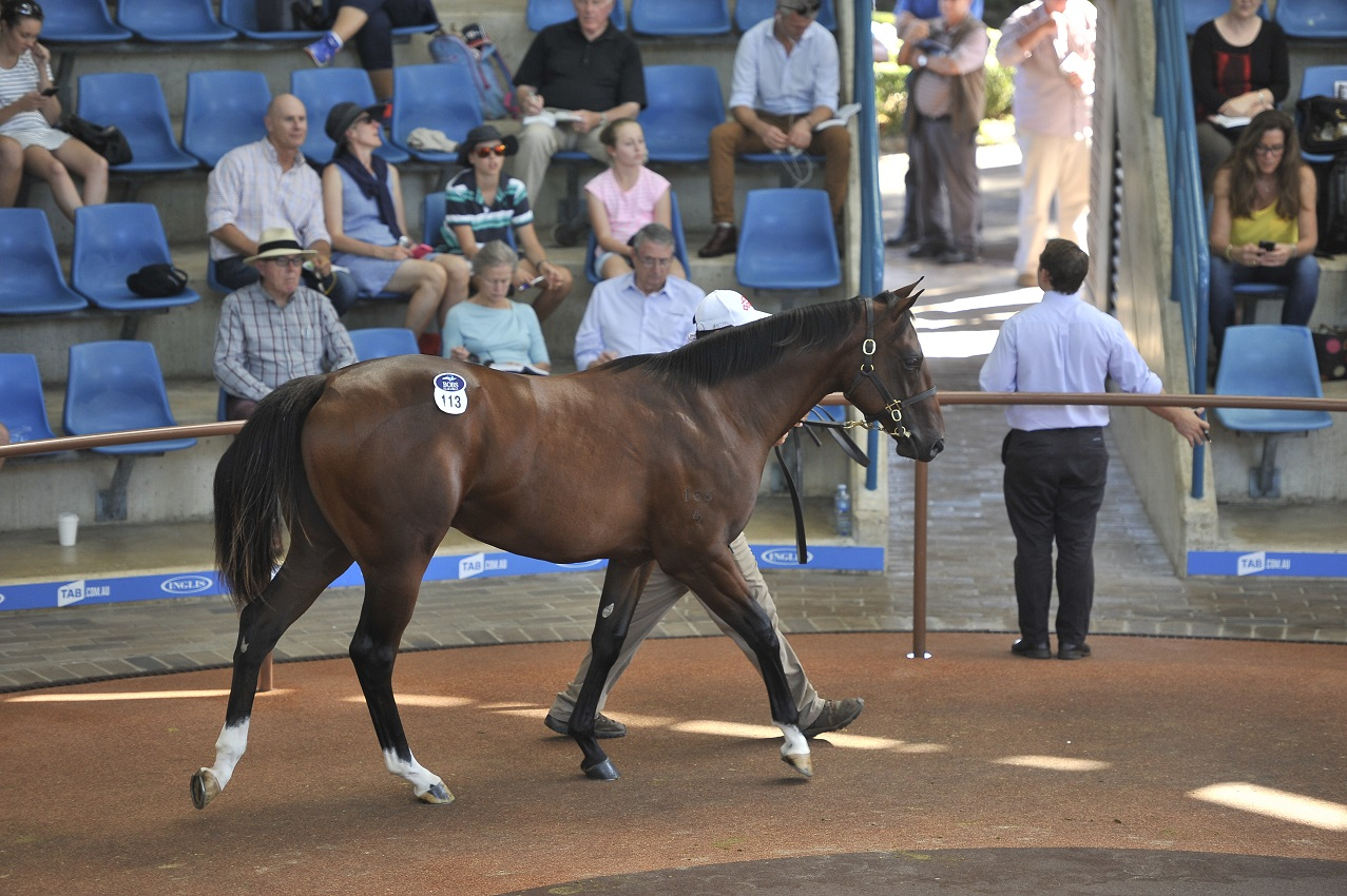 redoute's choice colt